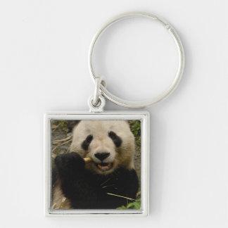Giant panda Ailuropoda melanoleuca) Family: 5 Silver-Colored Square Keychain