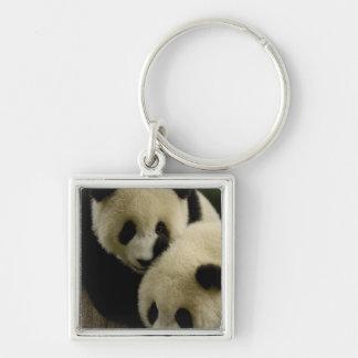 Giant panda (Ailuropoda melanoleuca) Family: 5 Silver-Colored Square Keychain