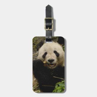 Giant panda Ailuropoda melanoleuca) Family: 5 Luggage Tag