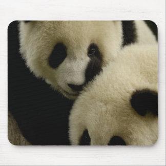 Giant panda (Ailuropoda melanoleuca) Family: 5 Mousepad