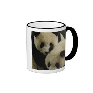 Giant panda (Ailuropoda melanoleuca) Family: 5 Mug