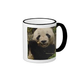 Giant panda Ailuropoda melanoleuca) Family: 5 Coffee Mug