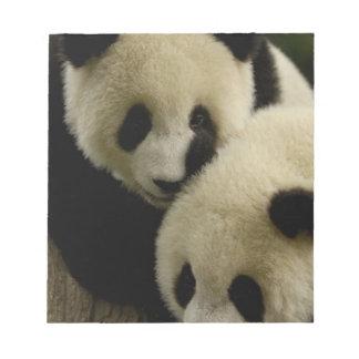 Giant panda (Ailuropoda melanoleuca) Family: 5 Scratch Pads
