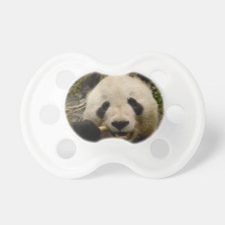 Giant panda Ailuropoda melanoleuca) Family: 5 Pacifier