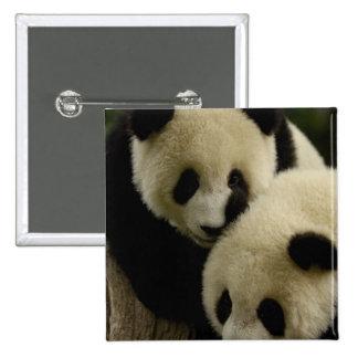 Giant panda (Ailuropoda melanoleuca) Family: 5 Pinback Button