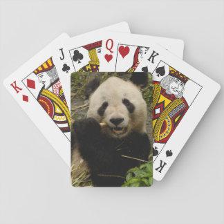 Giant panda Ailuropoda melanoleuca) Family: 5 Playing Cards