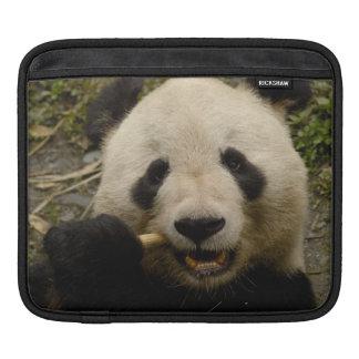 Giant panda Ailuropoda melanoleuca) Family: 5 Sleeve For iPads