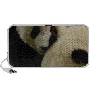 Giant panda (Ailuropoda melanoleuca) Family: 5 Speaker