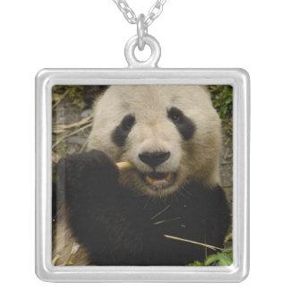 Giant panda Ailuropoda melanoleuca) Family: 5 Square Pendant Necklace