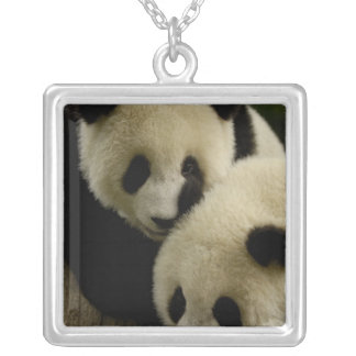 Giant panda (Ailuropoda melanoleuca) Family: 5 Square Pendant Necklace