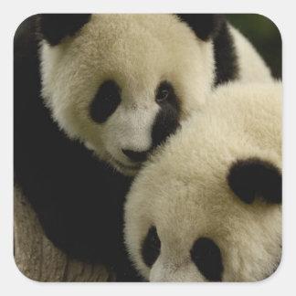 Giant panda (Ailuropoda melanoleuca) Family: 5 Square Sticker