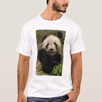 Giant panda Ailuropoda melanoleuca) Family: 5 T-Shirt