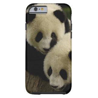 Giant panda (Ailuropoda melanoleuca) Family: 5 Tough iPhone 6 Case