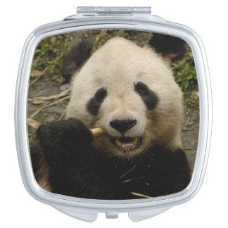 Giant panda Ailuropoda melanoleuca) Family: 5 Vanity Mirror