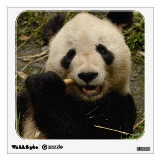 Giant panda Ailuropoda melanoleuca) Family: 5 Room Stickers