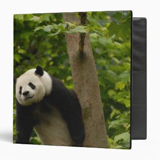 Giant panda Ailuropoda melanoleuca) Family: 6 Vinyl Binder