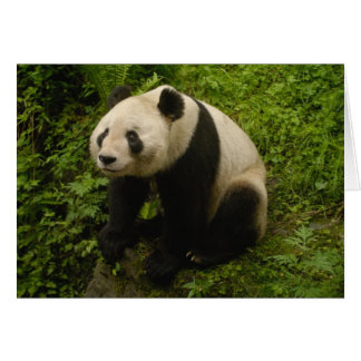 Giant panda (Ailuropoda melanoleuca) Family: 6 Card