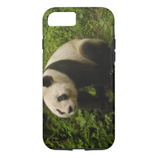 Giant panda (Ailuropoda melanoleuca) Family: 6 iPhone 8/7 Case