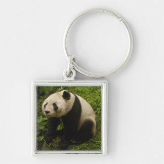 Giant panda (Ailuropoda melanoleuca) Family: 6 Silver-Colored Square Keychain