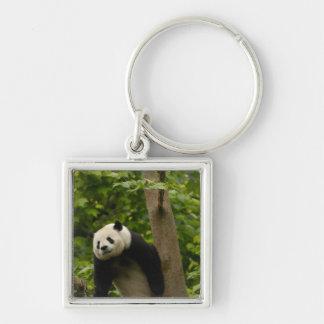 Giant panda Ailuropoda melanoleuca) Family: 6 Silver-Colored Square Keychain