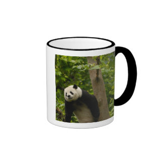 Giant panda Ailuropoda melanoleuca) Family: 6 Mug
