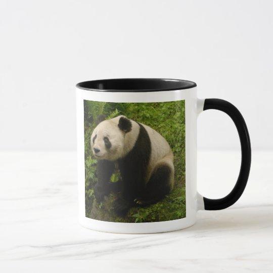 Giant panda (Ailuropoda melanoleuca) Family: 6 Mug
