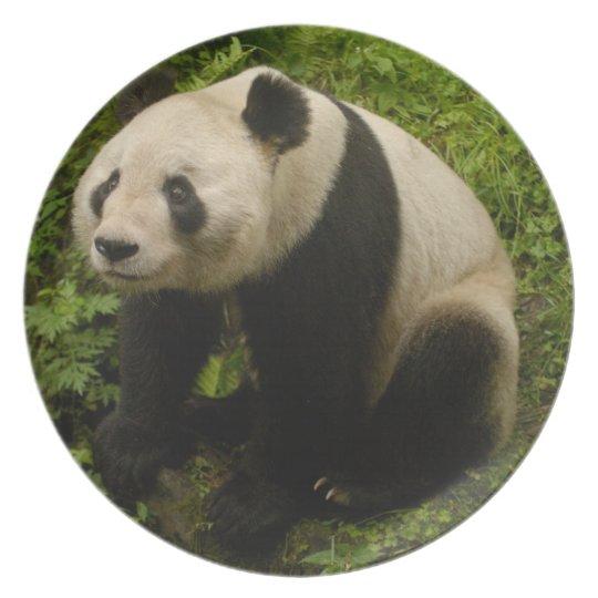 Giant panda (Ailuropoda melanoleuca) Family: 6 Plate
