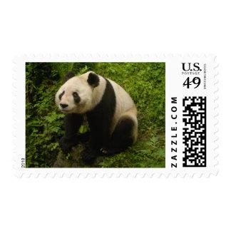 Giant panda (Ailuropoda melanoleuca) Family: 6 Postage