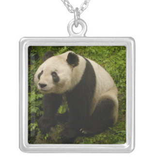 Giant panda (Ailuropoda melanoleuca) Family: 6 Silver Plated Necklace