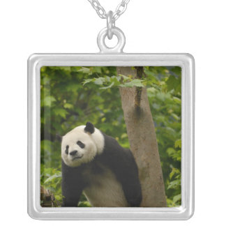 Giant panda Ailuropoda melanoleuca) Family: 6 Square Pendant Necklace