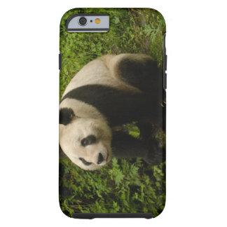 Giant panda (Ailuropoda melanoleuca) Family: 6 Tough iPhone 6 Case