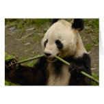 Giant panda Ailuropoda melanoleuca) Family: 7 Card