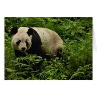 Giant panda (Ailuropoda melanoleuca) Family: 7 Card