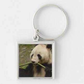 Giant panda Ailuropoda melanoleuca) Family: 7 Silver-Colored Square Keychain