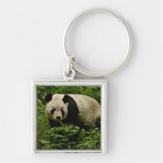 Giant panda (Ailuropoda melanoleuca) Family: 7 Silver-Colored Square Keychain