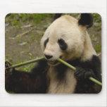 Giant panda Ailuropoda melanoleuca) Family: 7 Mousepads