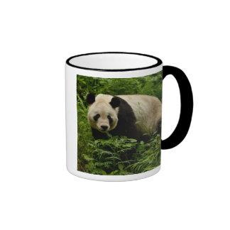Giant panda (Ailuropoda melanoleuca) Family: 7 Coffee Mug