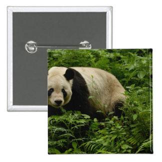 Giant panda (Ailuropoda melanoleuca) Family: 7 Pinback Button