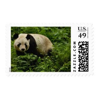 Giant panda (Ailuropoda melanoleuca) Family: 7 Postage