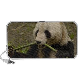 Giant panda Ailuropoda melanoleuca) Family: 7 Notebook Speakers