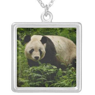 Giant panda (Ailuropoda melanoleuca) Family: 7 Square Pendant Necklace