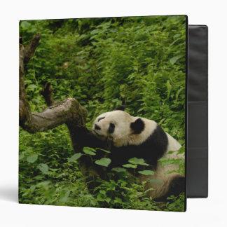 Giant panda Ailuropoda melanoleuca) Family: 8 Vinyl Binder