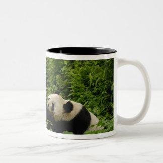Giant panda Ailuropoda melanoleuca) Family: 8 Mug