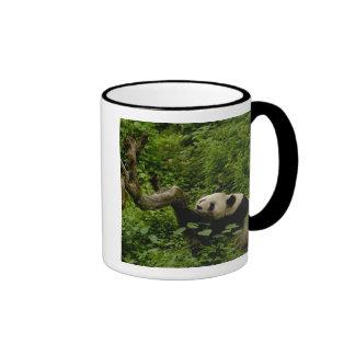 Giant panda Ailuropoda melanoleuca) Family: 8 Mugs