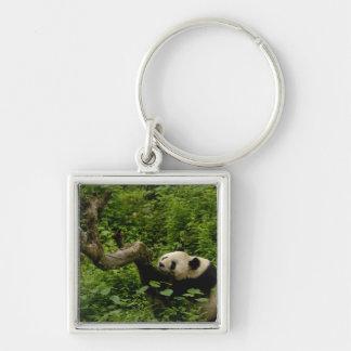 Giant panda Ailuropoda melanoleuca) Family: 8 Silver-Colored Square Keychain
