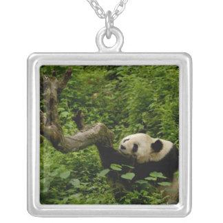 Giant panda Ailuropoda melanoleuca) Family: 8 Square Pendant Necklace