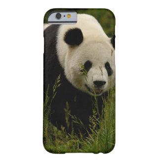 Giant panda (Ailuropoda melanoleuca) Family: Barely There iPhone 6 Case