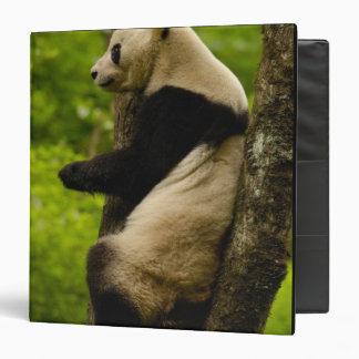 Giant panda Ailuropoda melanoleuca) Family: 3 Ring Binders
