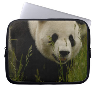 Giant panda (Ailuropoda melanoleuca) Family: Computer Sleeve