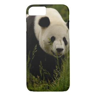 Giant panda (Ailuropoda melanoleuca) Family: iPhone 8/7 Case